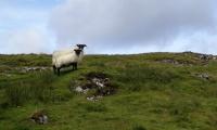 Ständige Begleiter auf der Isle of Skye
